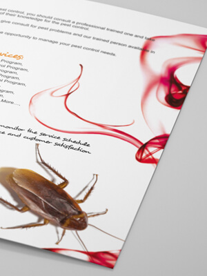 Spider Brochure Design